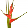 Heliconia red -100 cm