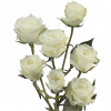 Spray roses viviane